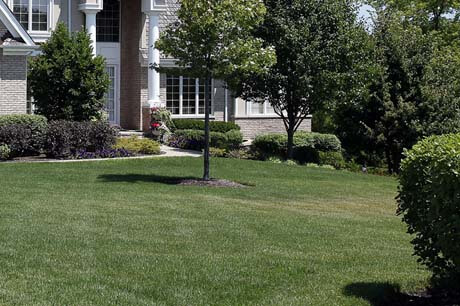 Professionally mowed lawn in Bloomington, IL