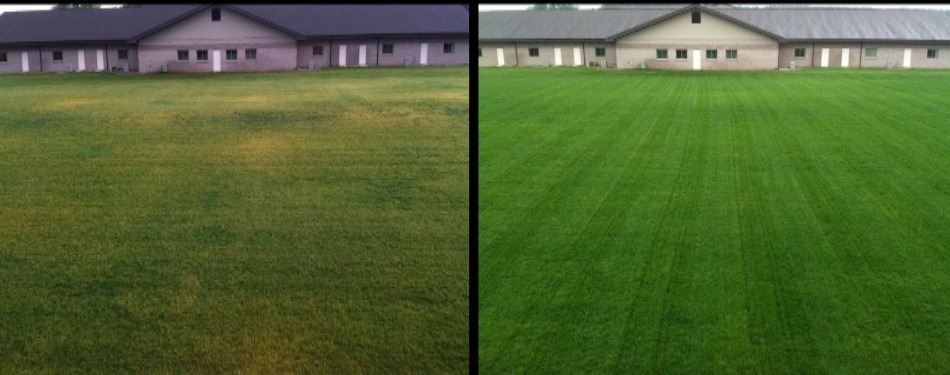 Lawn in Bloomington, IL that uses our fertilization and weed control program.